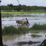 bangladesh galeas 2