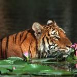 bangladesh galeas 5