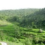 indoneziya galeas 9
