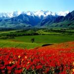 kyrgyzstan galeas 5