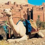 marokko galeas 4