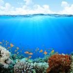 sejshelskie ostrova galeas 14