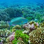 sejshelskie ostrova galeas 16