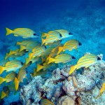 sejshelskie ostrova galeas 17
